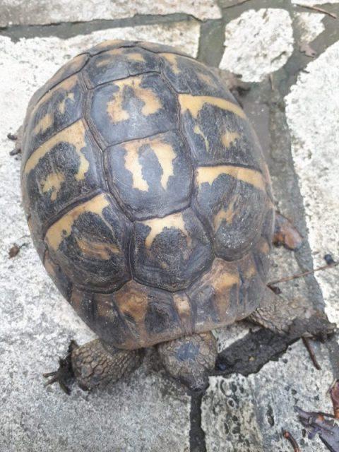 esemplare di tartaruga