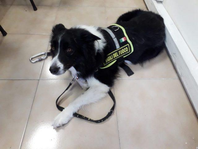 Ombra cane unità cinofila